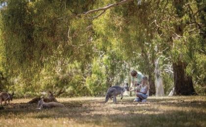 kangourous enfants Cleland Wildlife Park