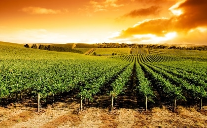 vignoble barossa valley